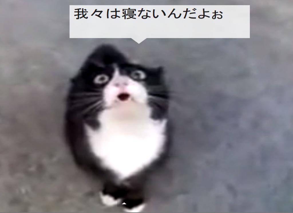 ネコ語しゃべれますか?